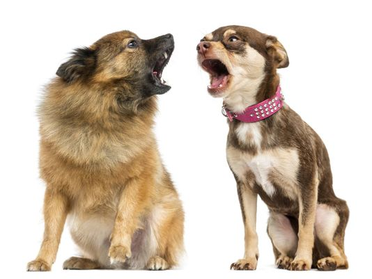 French Mayor Bans Dog Barking