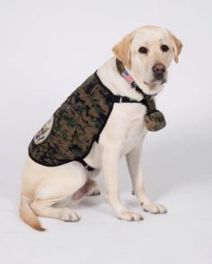 George W. Bush's Service Dog, Sully, Gets a New Assignment